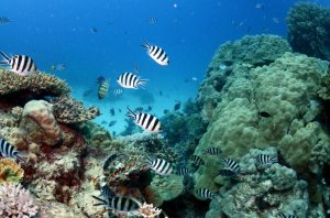 The Barrier Reef is facing threats from a multitude of factors